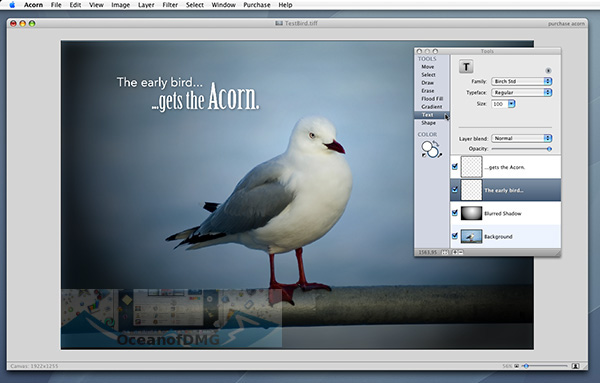 Acorn for Mac Latest Version Download